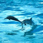 イルカの追い込み漁はなぜ残酷と言われているのか?知っておくべき本当の事